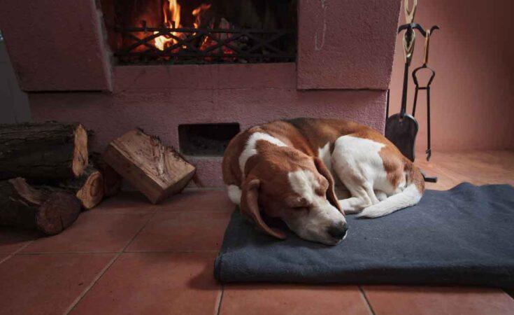 vakantiehuisje met hond en open haard