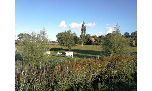 Natuurhuisje in Oostburg 51694 - Nederland - Zeeland - 6 personen